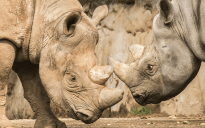A new space for rhinos to crash.
